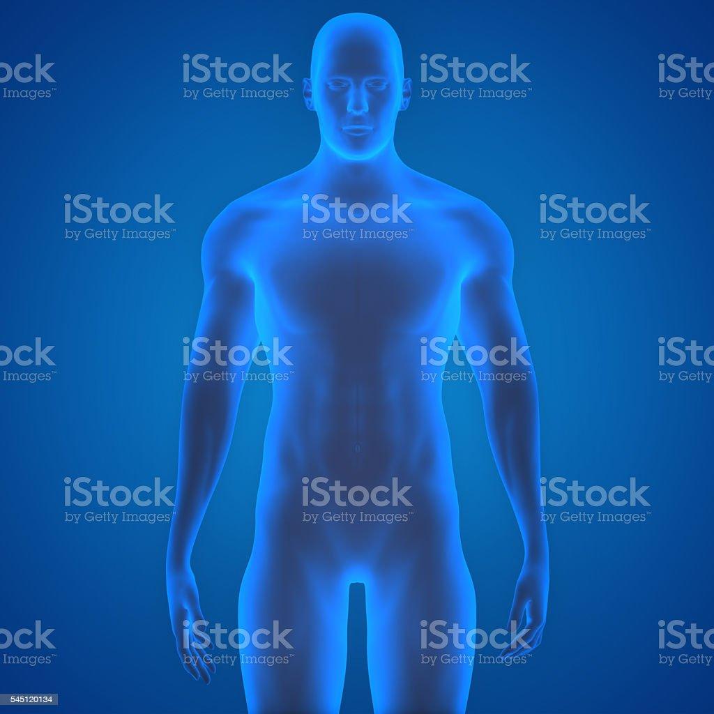 Human Male Muscle Body stock photo