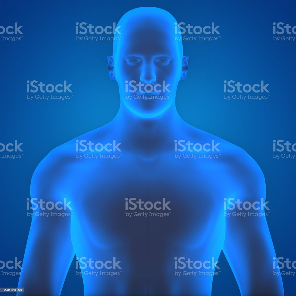Human Male Muscle Body stock photo