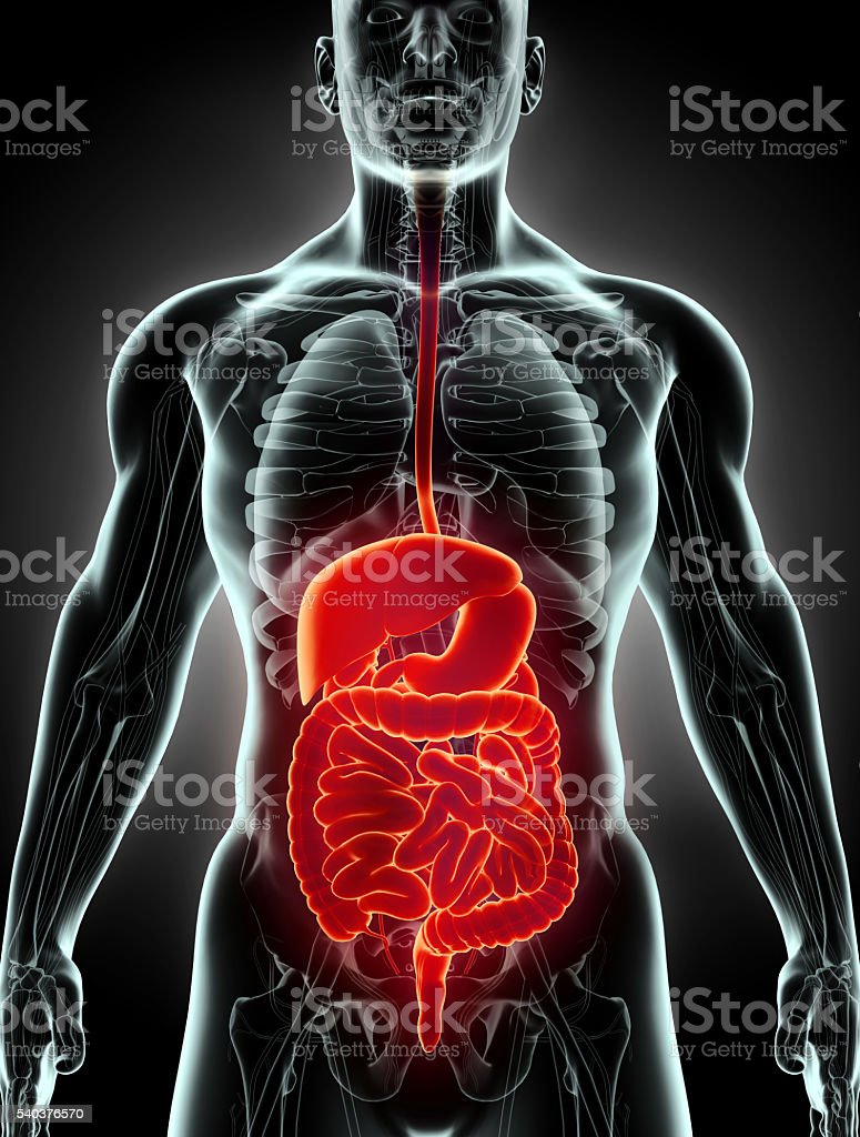 3D human male x-ray digestive system. stock photo