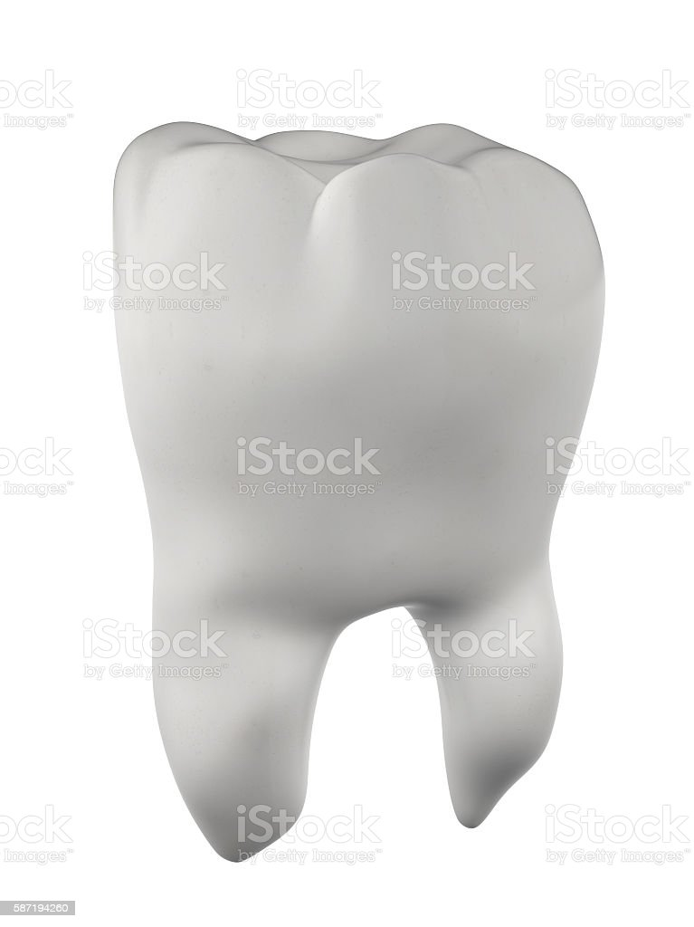 Human Molar Tooth stock photo