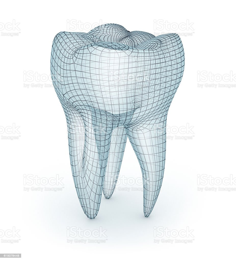 Human molar Tooth, wire model, 3d illustration stock photo