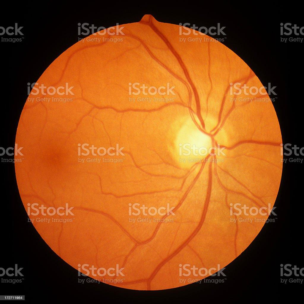 human optic disc, retina and blood vessels stock photo