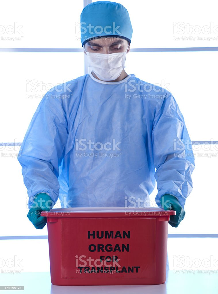 human organ for transplant stock photo