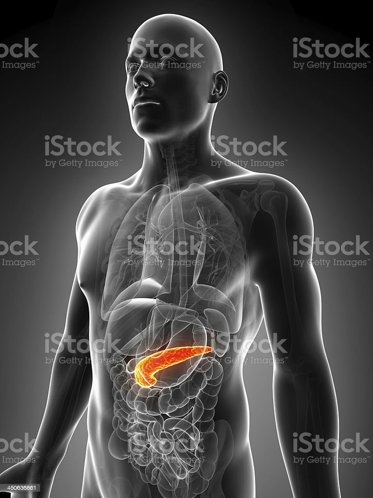 human pancreas stock photo