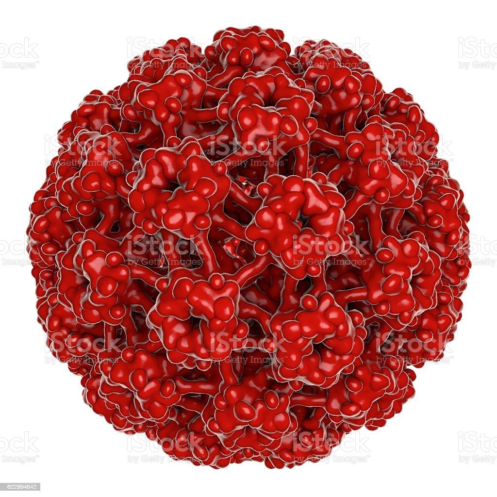 Human papillomavirus isolated on white background stock photo