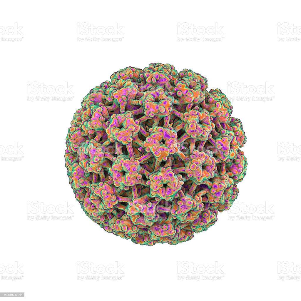 Human papillomaviruses isolated on white background stock photo