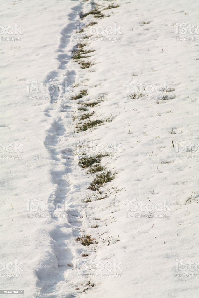 Human path in the snow. stock photo