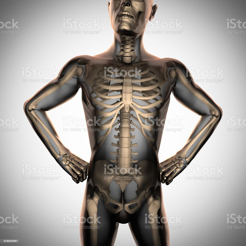 human radiography scan  with bones stock photo