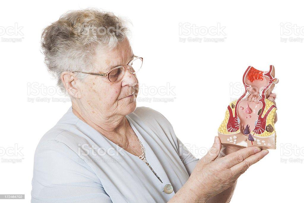 Human rectum model royalty-free stock photo