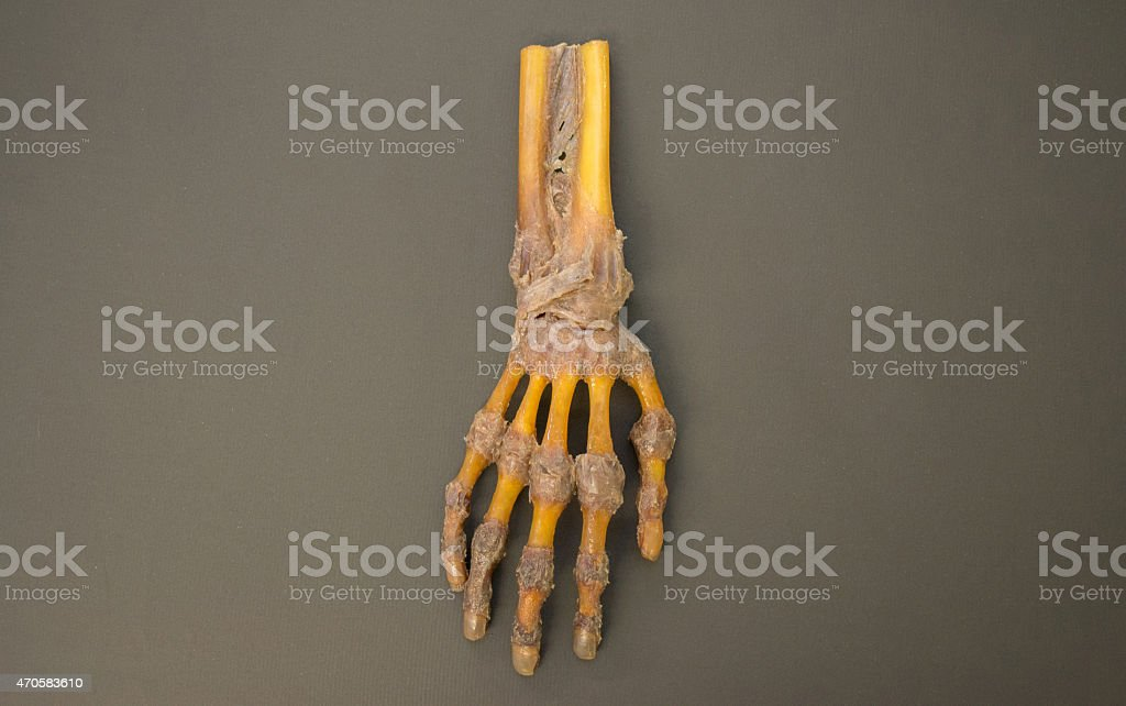 Human right hand dissected - top view - HD Resolution stock photo