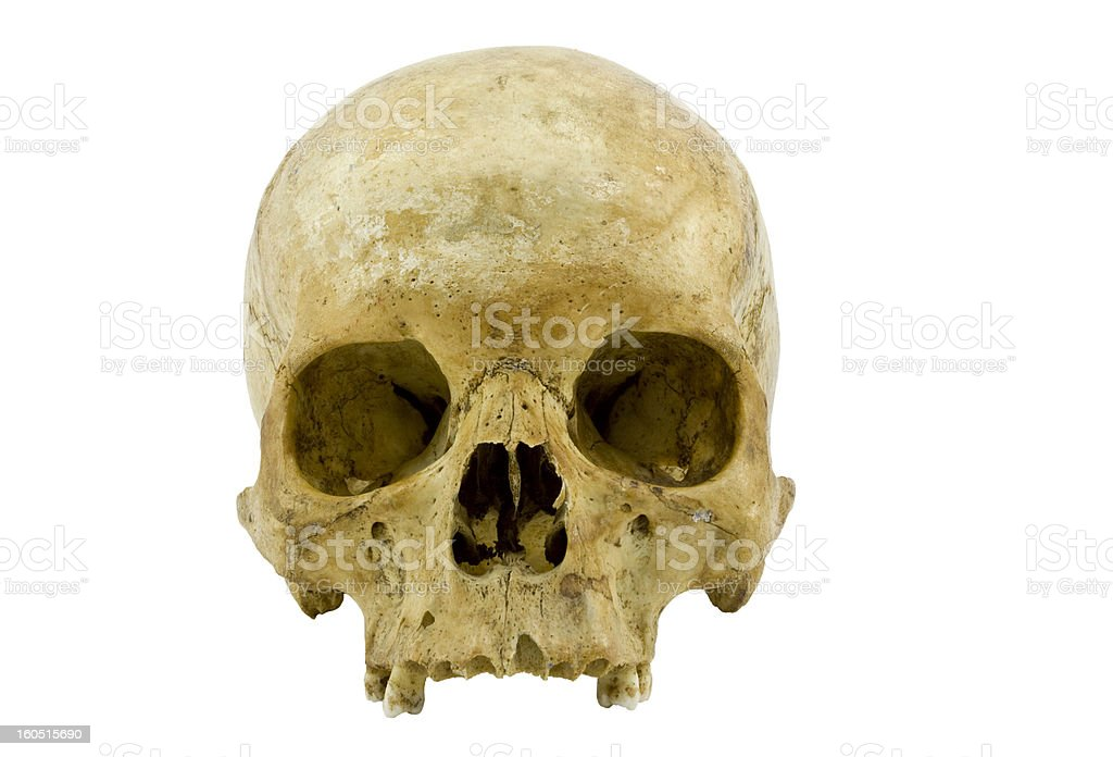Human scull royalty-free stock photo