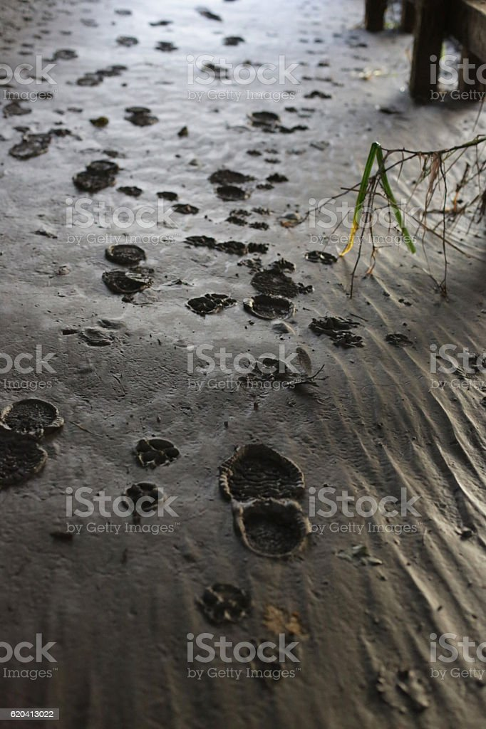 Human Shoe Prints and Animal Footprints in Silt, Canada stock photo