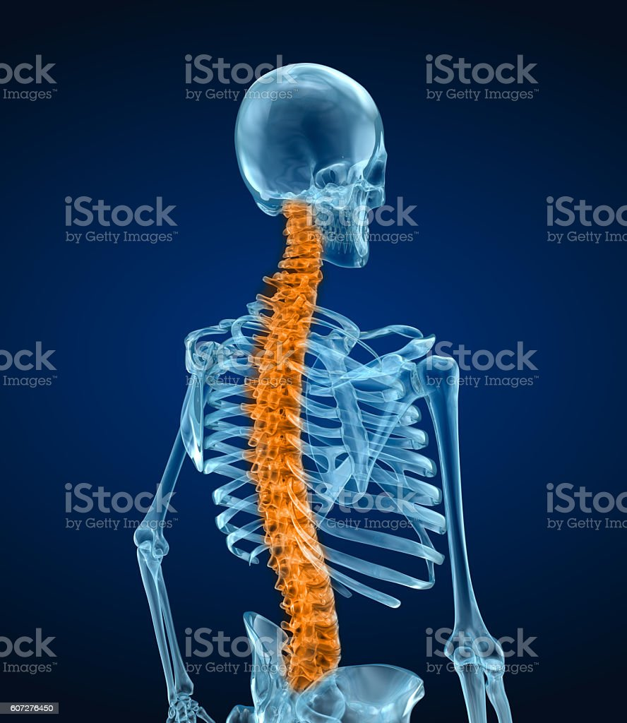 Human skeleton and spine. Xray view. Medically accurate 3D illustration stock photo