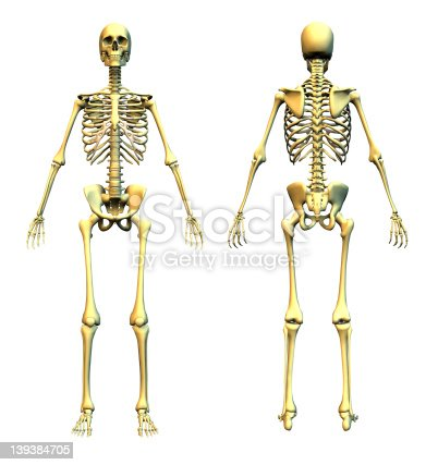 human skeleton front and back stock photo 139384705 | istock, Skeleton