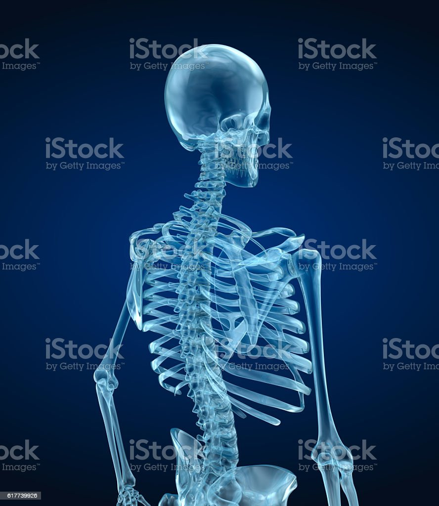 Human skeleton - head, Medically accurate 3d illustration . stock photo