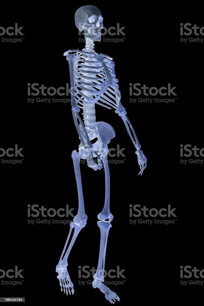 human skeleton isolated on black royalty-free stock photo