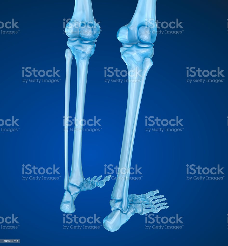 Human skeleton: Knee joint  . Medically accurate 3D illustration stock photo
