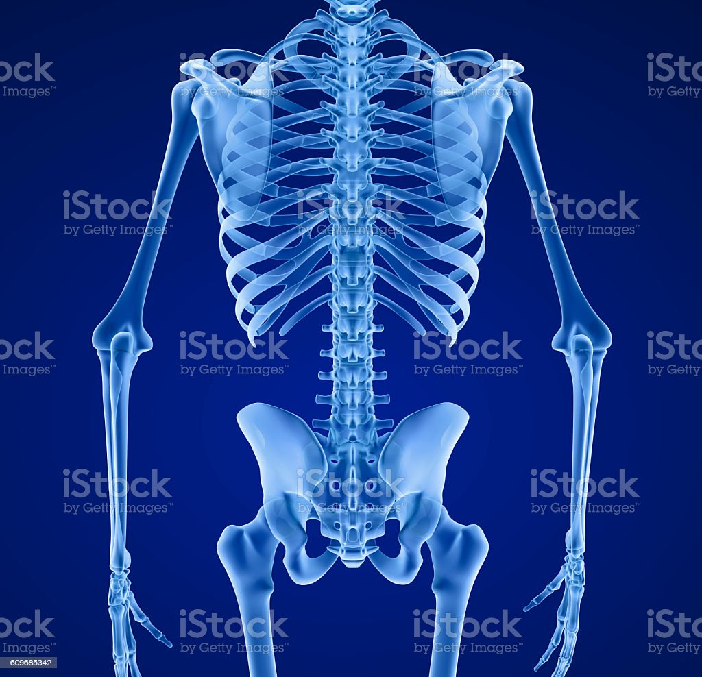 Human skeleton, Medically accurate 3d illustration . stock photo