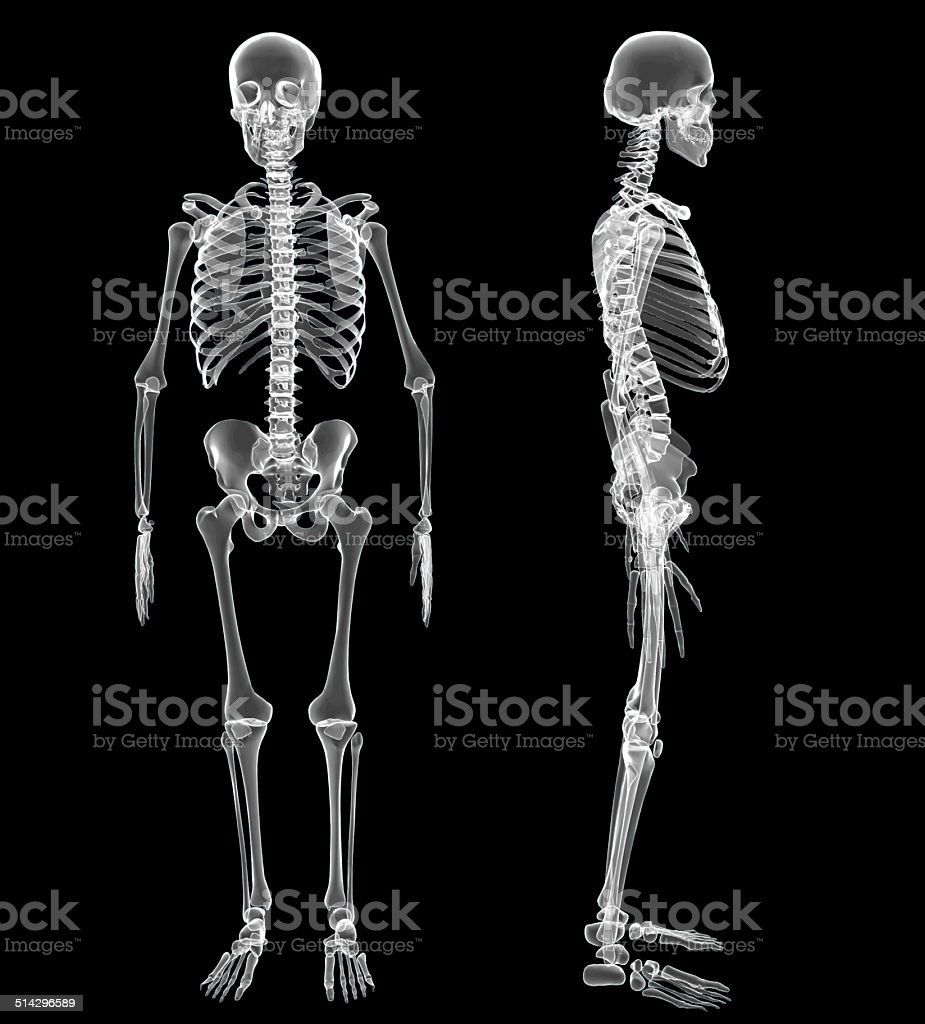 human skeleton pictures, images and stock photos - istock, Human Body