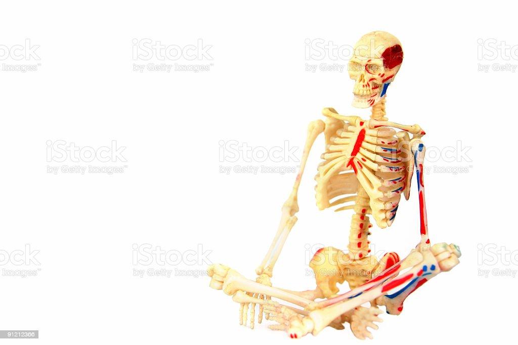 Human Skeleton royalty-free stock photo