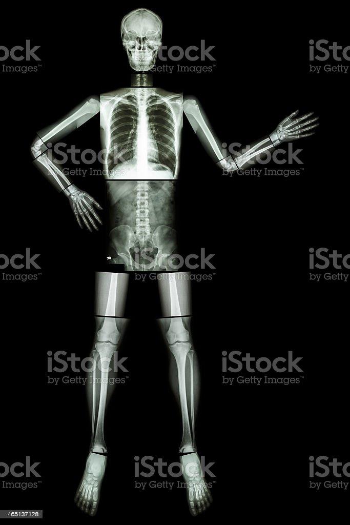 Human skeleton present something stock photo