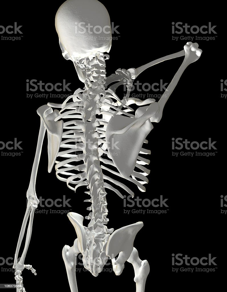 Human Skeleton Showing Neck Pain royalty-free stock vector art