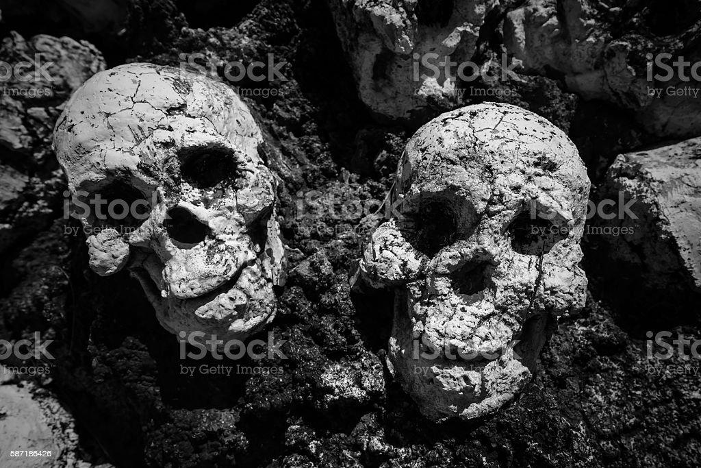 Human skeleton skulls , Black and white stock photo