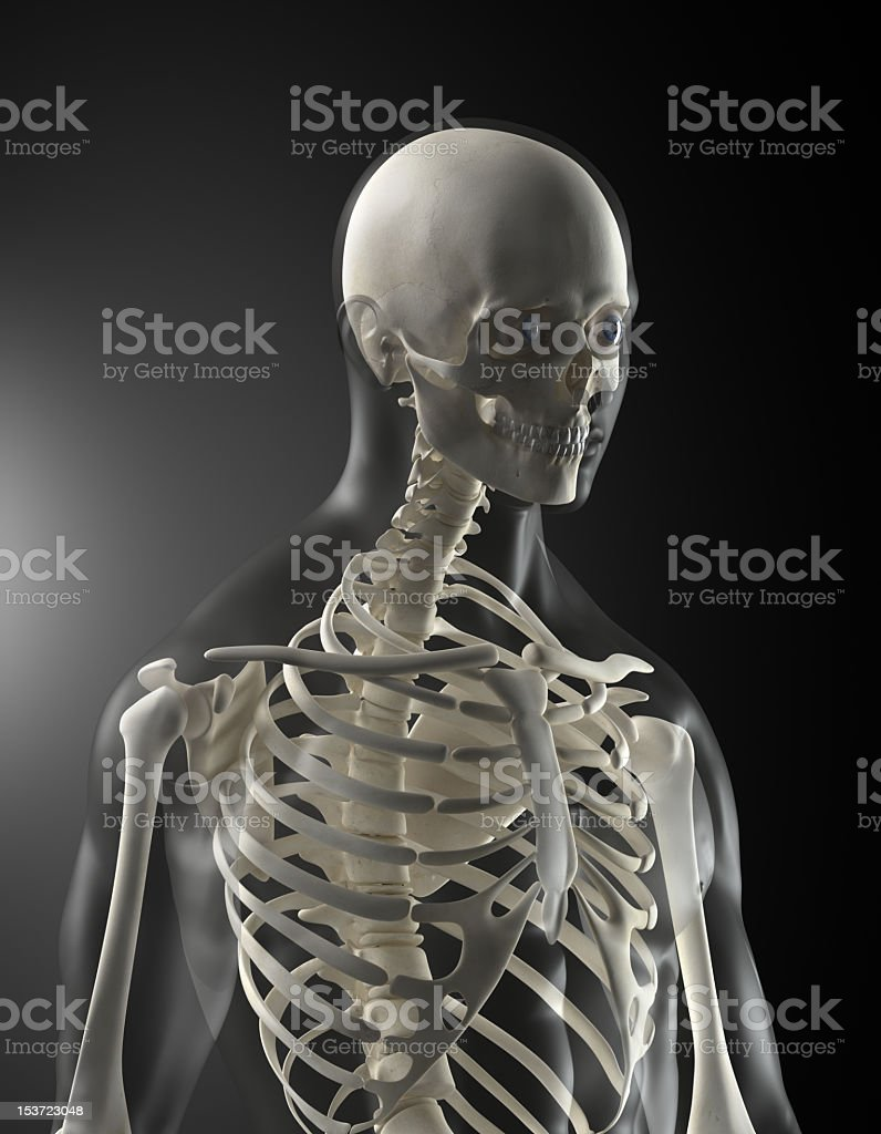 Human skeleton with transparent body stock photo