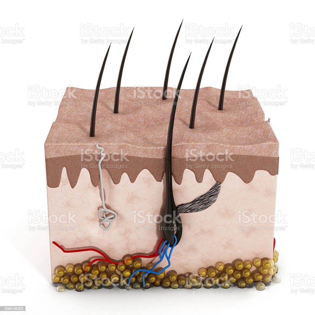 Human skin structure stock photo