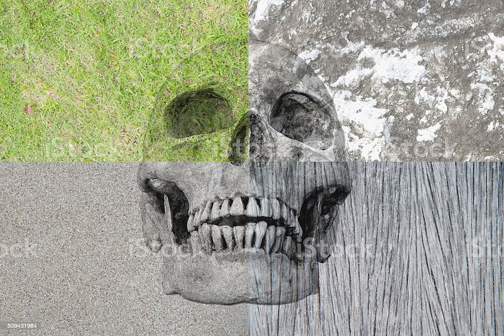 Human skull in the different background, grass rock, wood, cemen stock photo