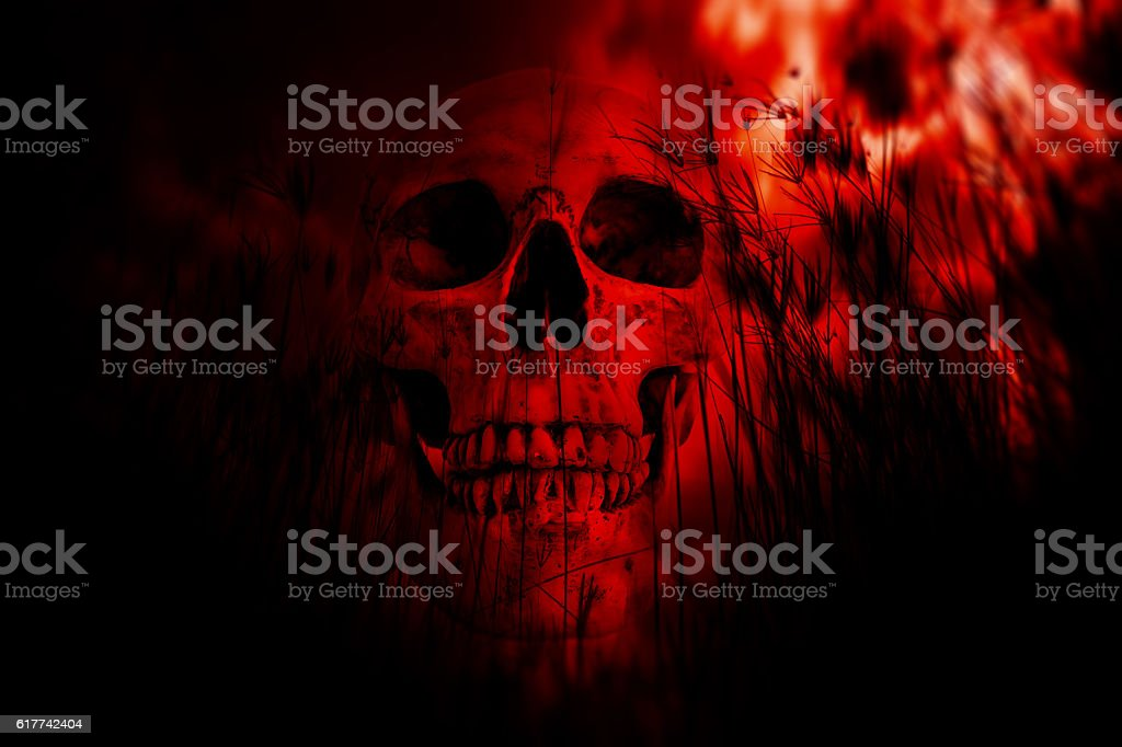 Human skull in the woods stock photo