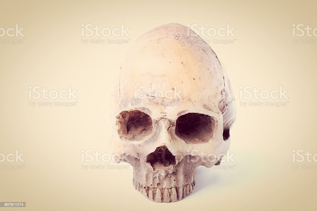 Human skull isolated on white background in vintage tone stock photo