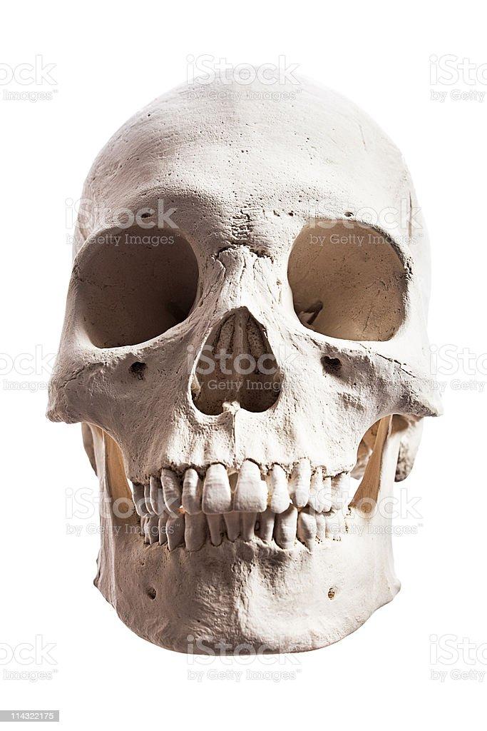 Human skull isolated royalty-free stock photo