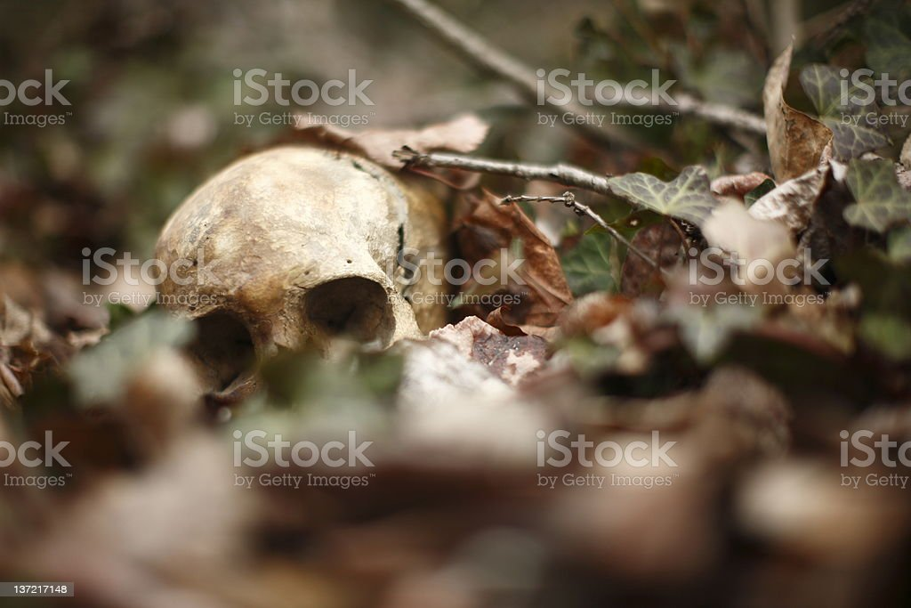 Human skull laying in the leaves in the forest stock photo