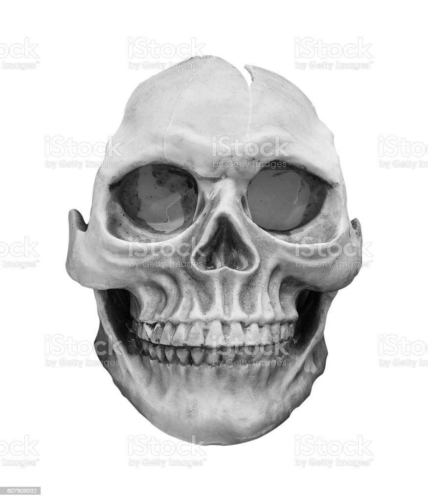 human skull model isolated on white background. stock photo