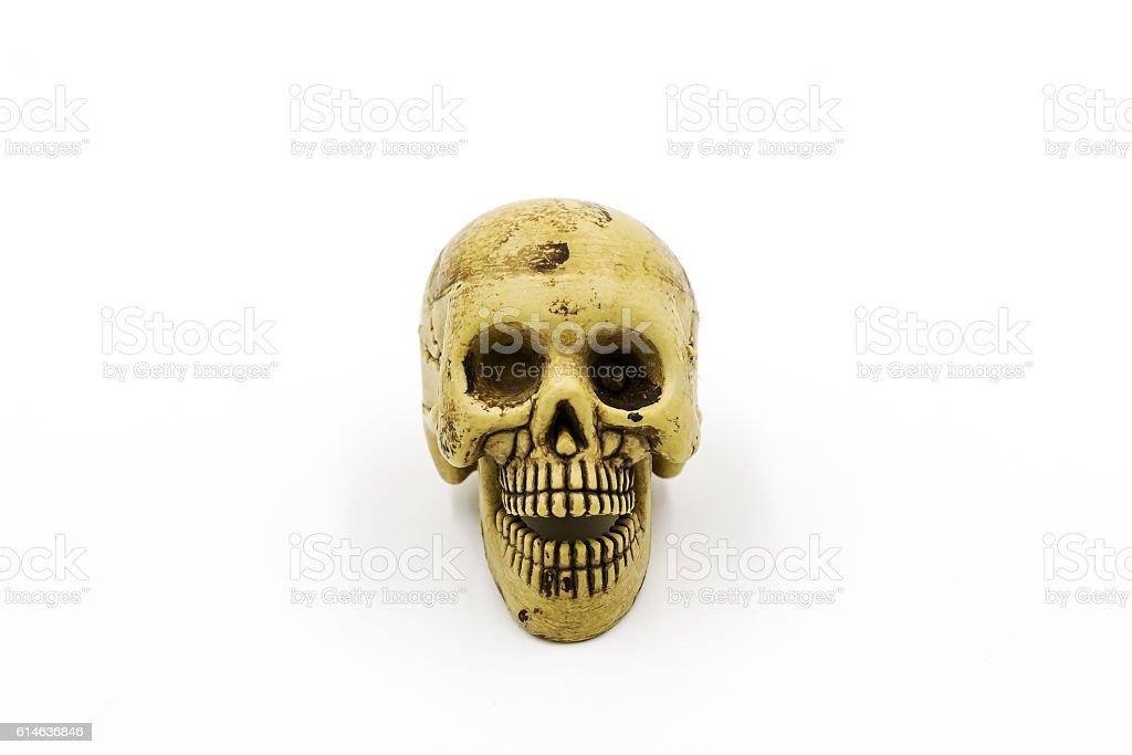 Human skull model stock photo