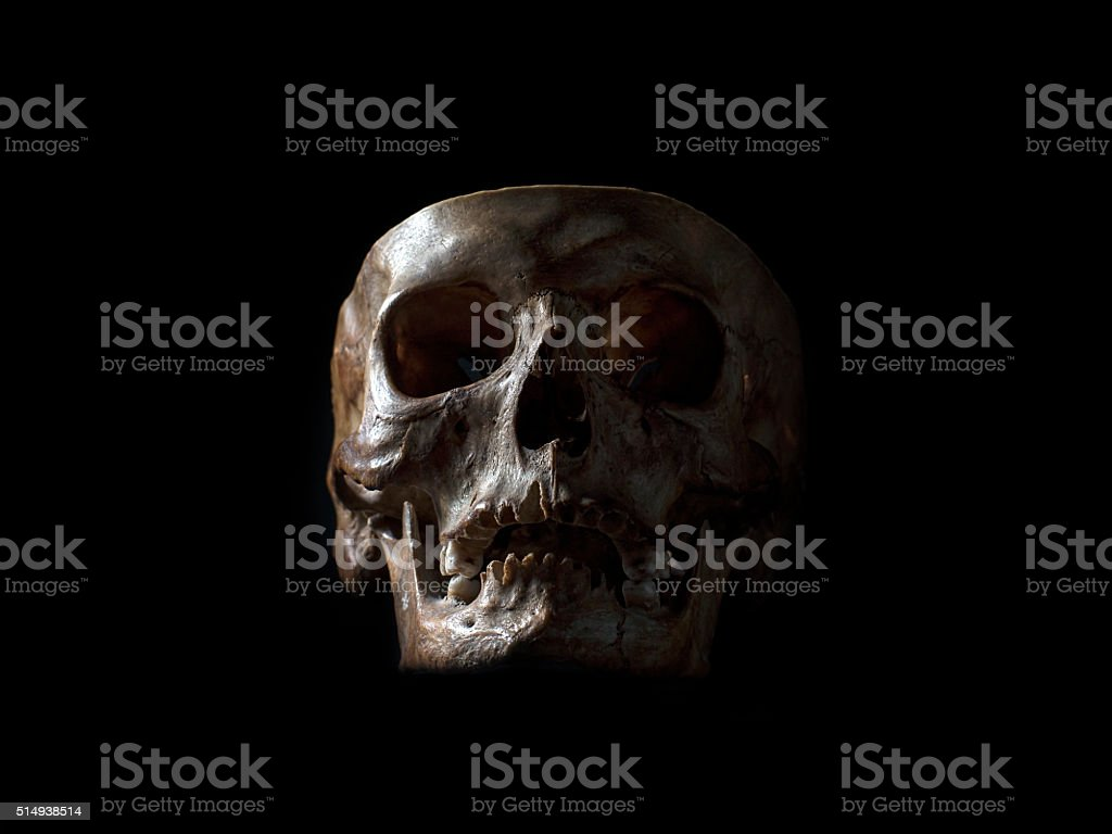 Human skull on black stock photo