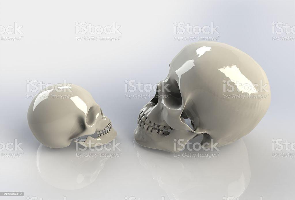 Human skull on isolated stock photo