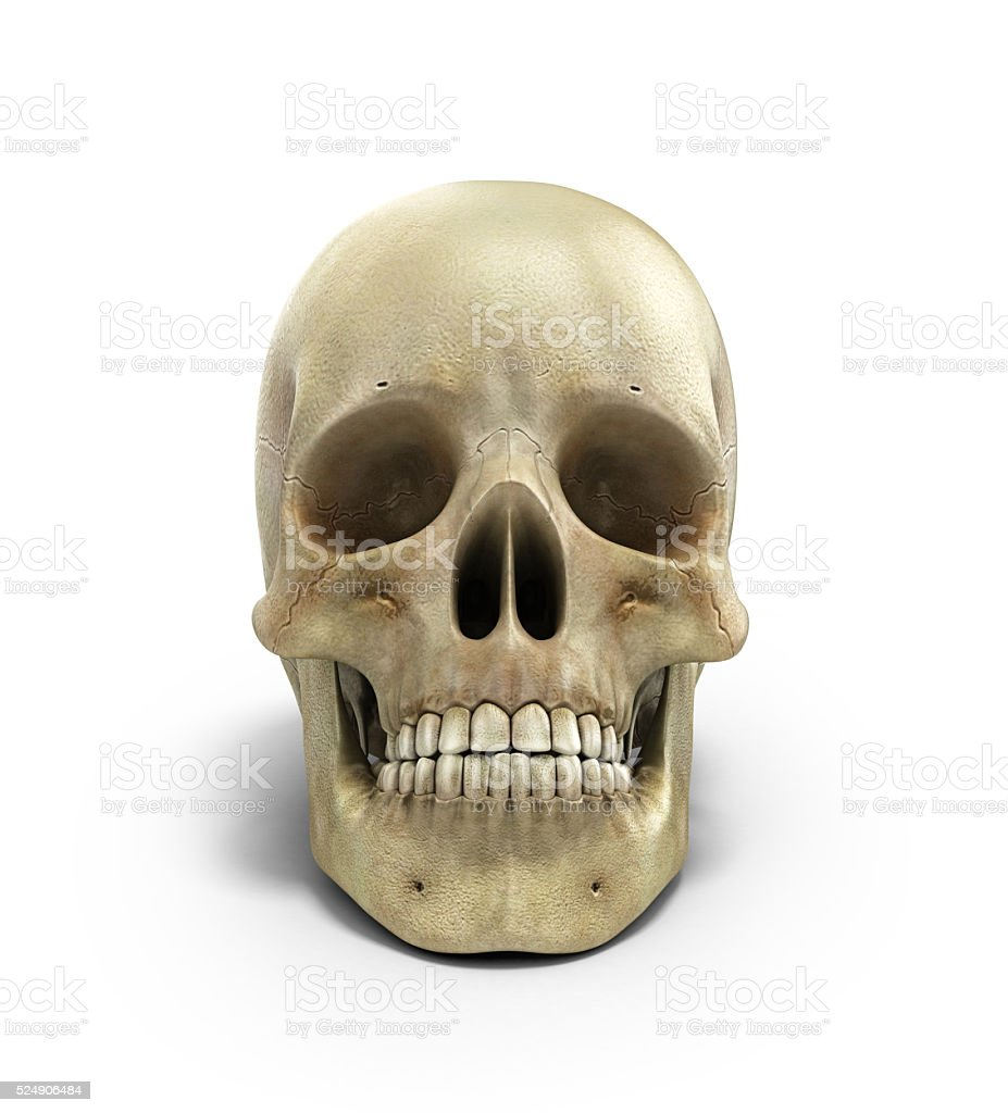 Human skull on isolated white background 3d render stock photo
