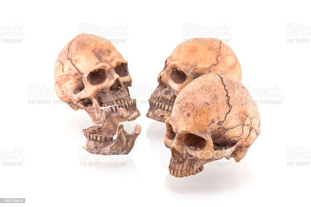 Human skull on isolated white background stock photo