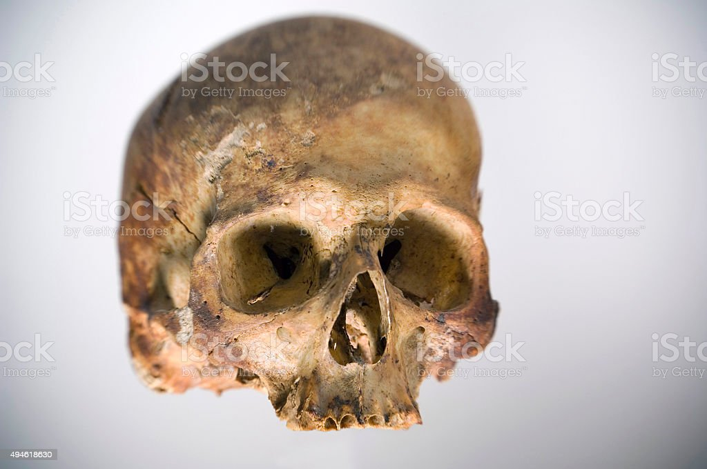 Human skull on neutral background stock photo
