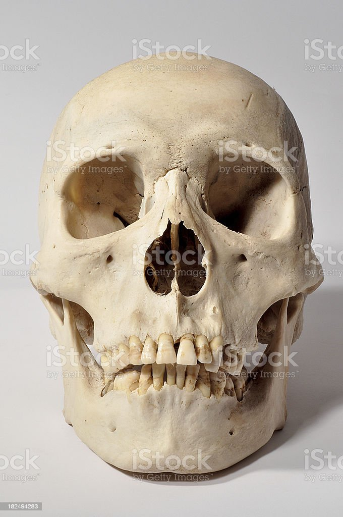 Human Skull on White background Death horror stock photo