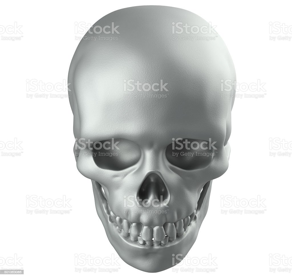 Human skull on white background with clipping path stock photo