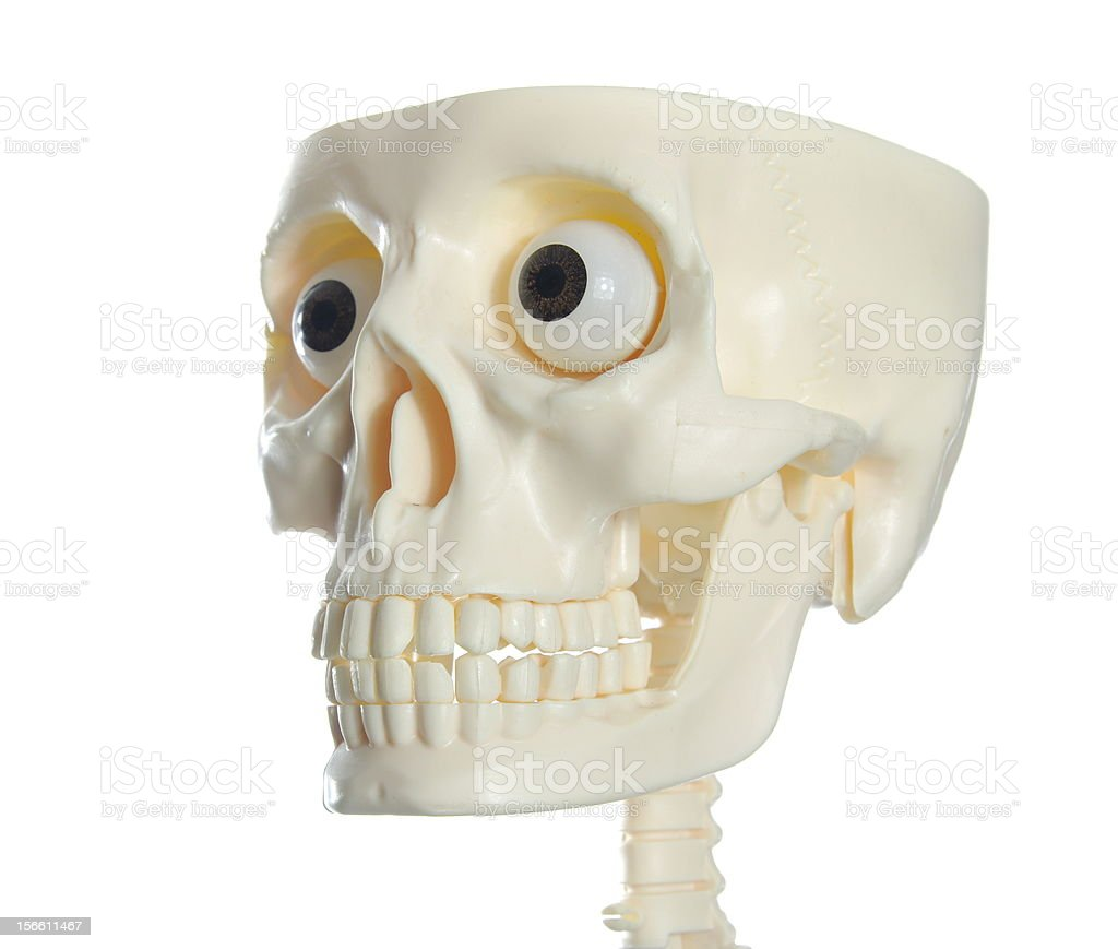 human skull royalty-free stock photo