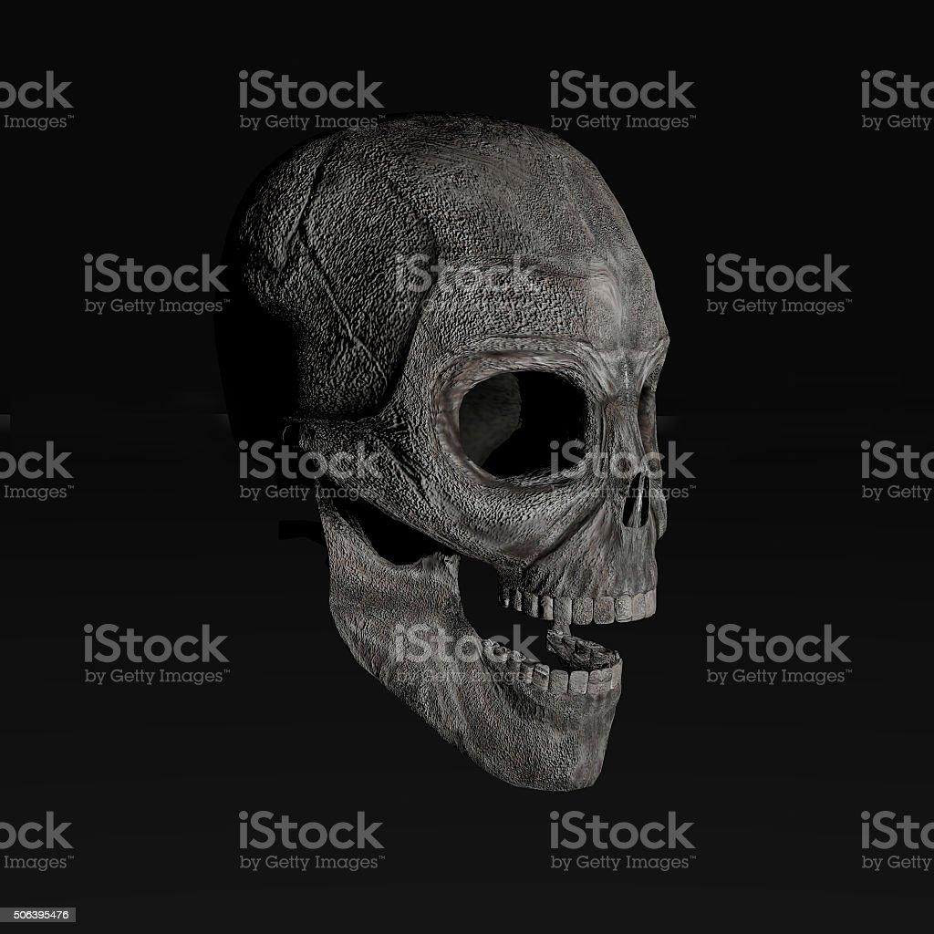 human skull stock photo