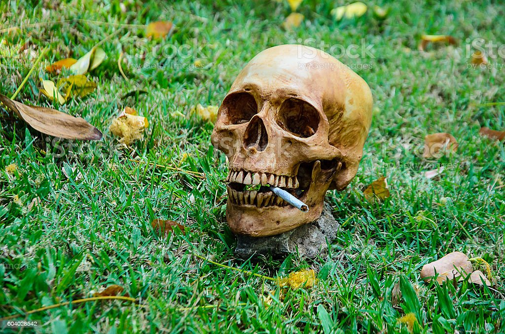 Human skull smoking the cigarette  on the grass background .focu stock photo