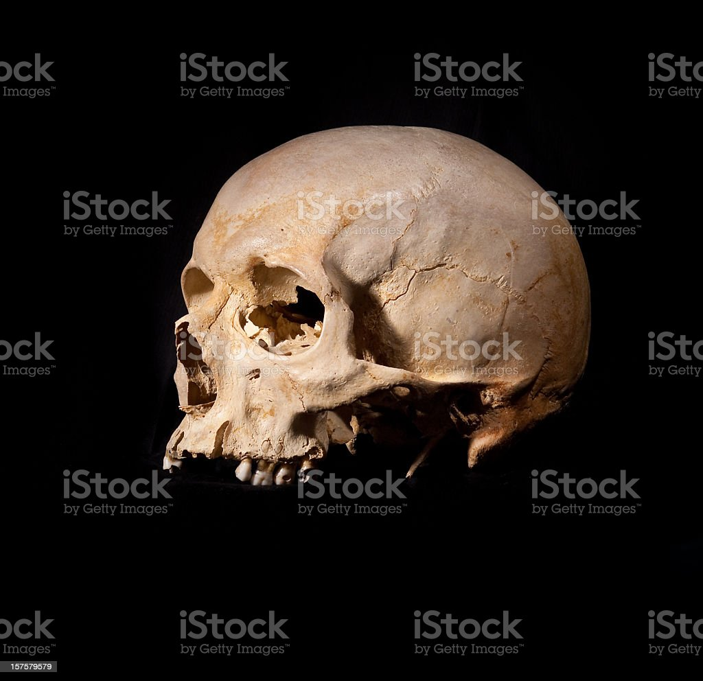 Human Skull without Jaw Bone stock photo