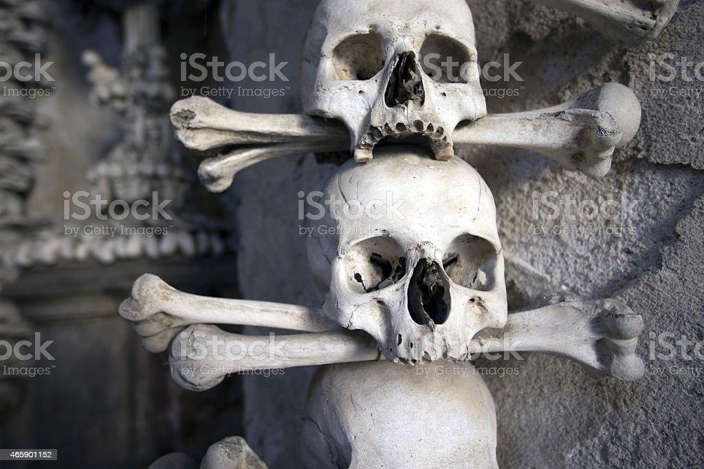 Human Skulls Closeup stock photo