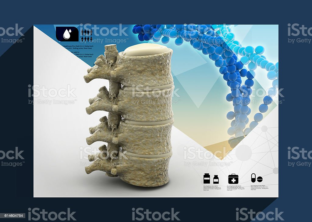 Human spinal cord stock photo