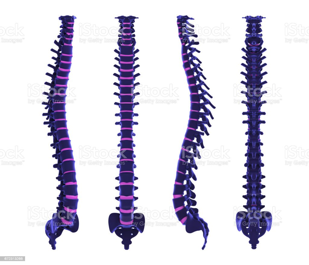 Human Spine Anatomy stock photo